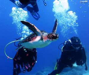 Kaş Caretta Camel Reef