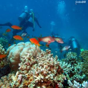 kızıldeniz dalış turu reef dalışı