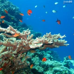 Kızıldeniz Mısır Dalış Turu Tekne reef1