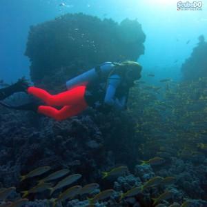 Kızıldeniz Mısır Dalış Turu reef