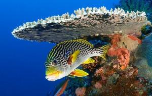 phi-phi-scuba-diving 6