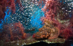 phi-phi-scuba-diving 7