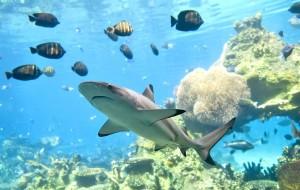 phi-phi-scuba-diving 8