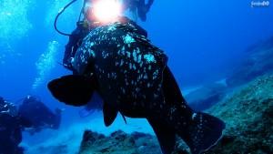 Kaş Dalış Turu Camel Reef Orfoz Şaziye